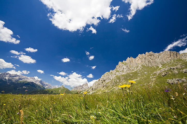 Rocky Mountain scenery with flowers mountains and clouds speckling blue skies