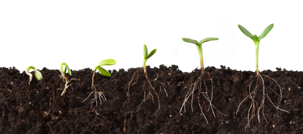 A Soil's Co-operative: A Guide to Building and Maintaining Healthy Soil